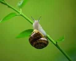 カタツムリ 繁殖