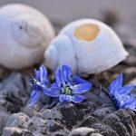 カタツムリの殻が透明や白い色に変化した原因は?