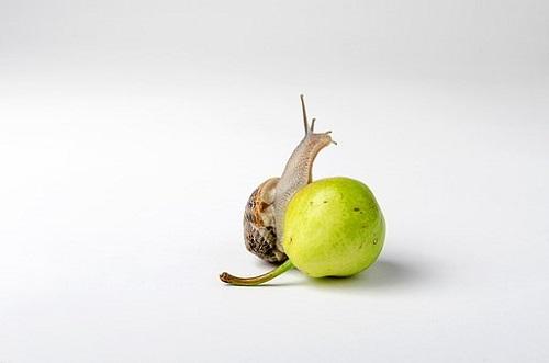 カタツムリ 孵化 期間 日数