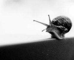 カタツムリ 殻 取る