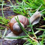 カタツムリと卵の駆除方法