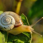 カタツムリの赤ちゃんの育て方や、飼育ケースの掃除方法について