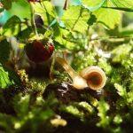 カタツムリは野菜にとって害虫?