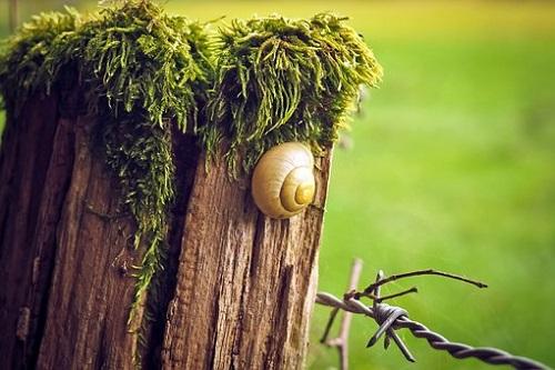 カタツムリ 卵 孵化しない