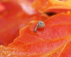 カタツムリ 種類 小さい