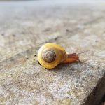 カタツムリの赤ちゃんって生まれた時から殻はついているの?