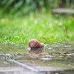 カタツムリの冬眠と冬眠するための土と霧吹き