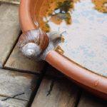 日本にいるカタツムリの種類