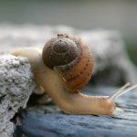 カタツムリの飼育に必要な土って何を使うの?卵の代用は?