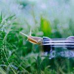 カタツムリの産卵にかかる時間と時期