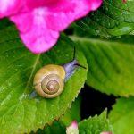 カタツムリの産卵と孵化について