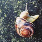 カタツムリの殻はどんな成分でできている?割れたら再生できる?
