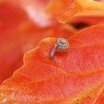 カタツムリの種類は小さいのから大きいのまで豊富!