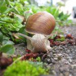 カタツムリの繁殖について、盛んな時期はいつ?