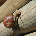 カタツムリの産卵の際は、ふかふかの土を!