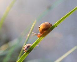 カタツムリ 飼育 餌